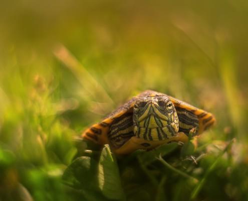Żółw makro Arkadiusz MAkowski
