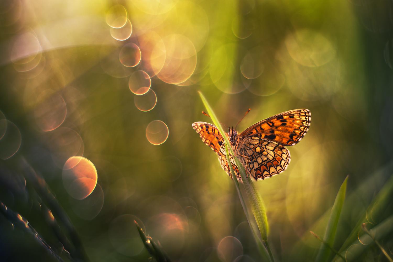 Butterfly motyl